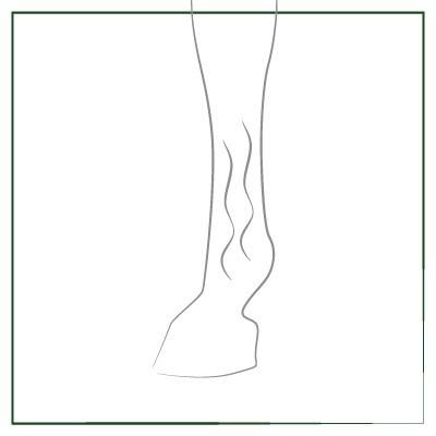 Gel tendones